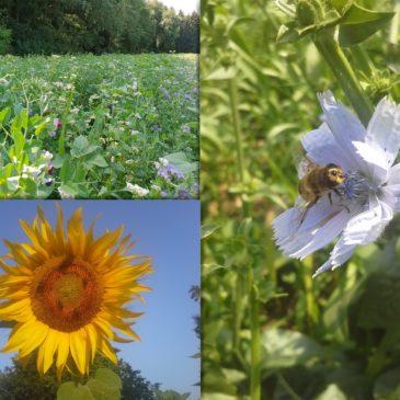 Hofpost Nr. 7: Von Insekten, Menschen und lebendigen Strukturen